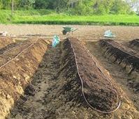 R aliser un jardin potager naturel bio permaculture culture sur butte for Culture sur butte permaculture